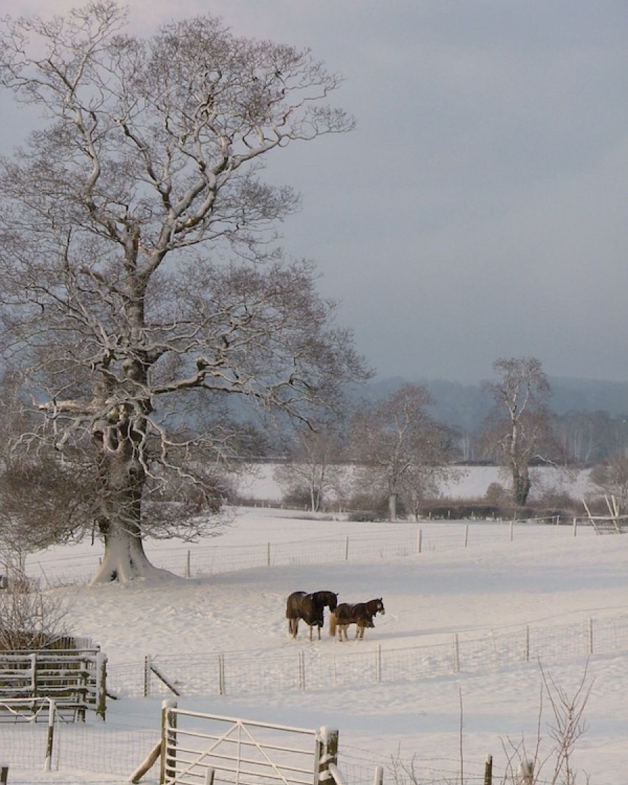 Tree-and-Horses-in-the-snow